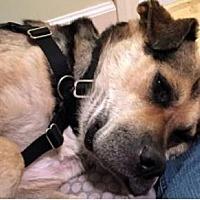 Adopt A Pet :: Rudy - Brooklyn, NY