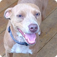Adopt A Pet :: Cocoa (Wendy- Blossvale) - Blossvale, NY