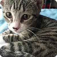 Adopt A Pet :: DeeDee - Philadelphia, PA