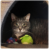 Adopt A Pet :: Melanie - Welland, ON