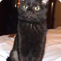 Adopt A Pet :: Amora - Morganton, NC