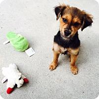 Adopt A Pet :: Buddy Boy - Houston, TX