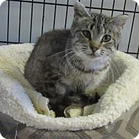 Adopt A Pet :: Elle - Glenwood, MN