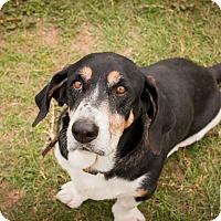 Adopt A Pet :: Delmar - Leander, TX