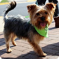 Adopt A Pet :: Billy Dee - Centreville, VA