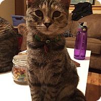 Adopt A Pet :: Analea (playful & sweet!) - Hesperia, CA