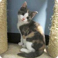Adopt A Pet :: BONNIE - Santa Clara, CA
