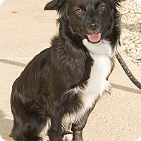 Adopt A Pet :: Tuxedo - Agoura Hills, CA
