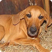 Adopt A Pet :: Savannah - Groton, MA