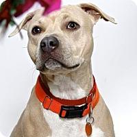 Adopt A Pet :: MIMI - Gloucester, VA