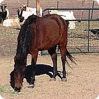 Adopt A Pet :: Mejo - Colorado Springs, CO