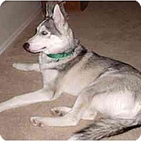 Adopt A Pet :: Koda - Courtesy Posting - Scottsdale, AZ