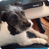 Adopt A Pet :: Dresden - Ft. Collins, CO