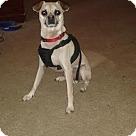 Adopt A Pet :: Pluto (COURTESY POST)