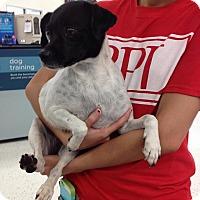Adopt A Pet :: Sarah - Miami, FL
