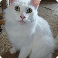 Adopt A Pet :: Karen - Tomball, TX