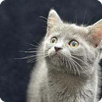 Adopt A Pet :: Ali151647 - Atlanta, GA
