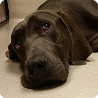 Adopt A Pet :: *Milo - Birmingham, AL