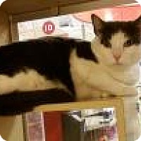 Adopt A Pet :: Ipcus - North Haven, CT