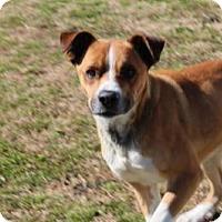 Adopt A Pet :: Happy Jack - Harmony, Glocester, RI