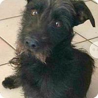 Adopt A Pet :: Toto-ADOPTION PENDING - Boulder, CO