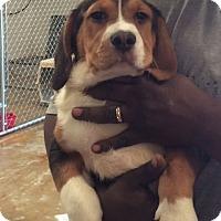 Adopt A Pet :: Sheldon - Rochester, NY