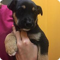 Adopt A Pet :: Lenis - Rocky Mount, NC