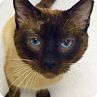 Adopt A Pet :: Ivan - Mission Viejo, CA