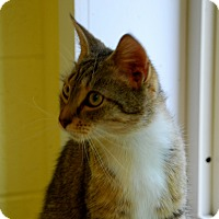 Adopt A Pet :: Izzy - Salem, WV