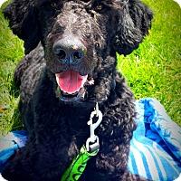 Adopt A Pet :: Satchmo - Boise, ID