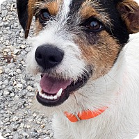 Adopt A Pet :: Jennie - MEET HER - Woonsocket, RI