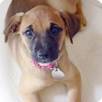 Adopt A Pet :: Frankie - Hagerstown, MD