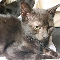 Adopt A Pet :: Brady B - Windsor, CT