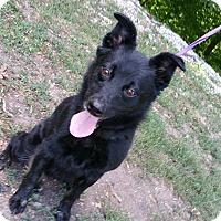 Adopt A Pet :: Kaylee, small fry - Marion, IN