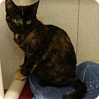 Adopt A Pet :: Darcy - Thompson Falls, MT