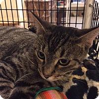 Adopt A Pet :: Bob Belcher - Chicago, IL