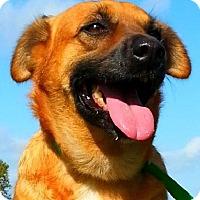 Adopt A Pet :: Mona - Simsbury, CT