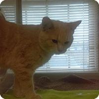 Adopt A Pet :: Toby - South Haven, MI