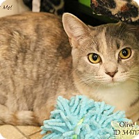 Adopt A Pet :: Olive - Camden, DE