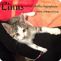 Adopt A Pet :: Linus - Whitewater, WI