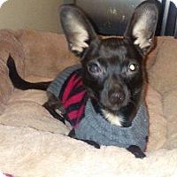 Adopt A Pet :: JACK - Coeburn, VA