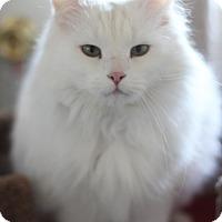 Adopt A Pet :: Amora - Dalton, GA