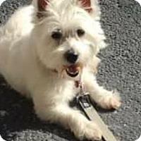 Adopt A Pet :: Bailey – courtesy post - White Settlement, TX