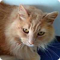 Adopt A Pet :: Courtney - Davis, CA