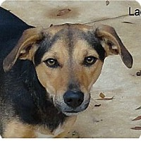 Hound (Unknown Type)/Terrier (Unknown Type, Medium) Mix Dog for adoption in Ozark, Alabama - Lady (Mayhem)