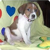 Adopt A Pet :: Mitsi - Clayton, OH