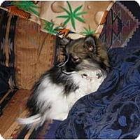 Adopt A Pet :: LiLOO - Hesperus, CO
