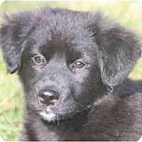Adopt A Pet :: Kixx - Albany, NY
