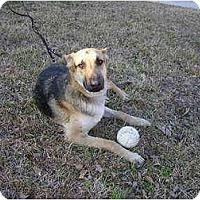 Adopt A Pet :: Oscar - Green Cove Springs, FL