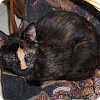 Adopt A Pet :: Bell - Richmond, VA